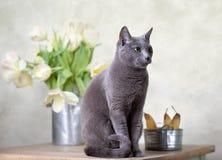 Gato y tulipanes Imagenes de archivo