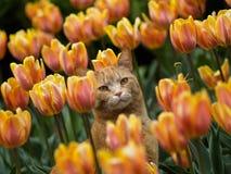 Gato y tulipanes Foto de archivo libre de regalías