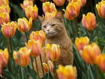 Gato y tulipanes Foto de archivo