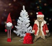 Gato y un árbol de navidad blanco foto de archivo libre de regalías
