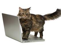 Gato y un ordenador Fotografía de archivo libre de regalías