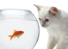 Gato y un pescado del oro imagenes de archivo