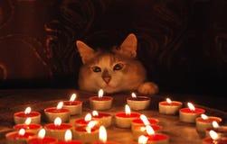 Gato y velas ardientes Imagenes de archivo