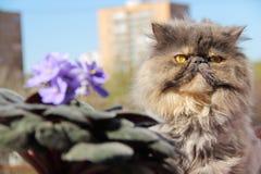 Gato y violetas imagenes de archivo