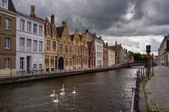 Gator av Bruges swans royaltyfri fotografi