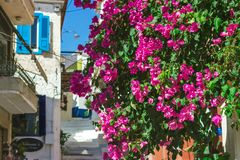 Gator av den Neorio staden i den Poros ön, Grekland; Träd med rosa färger arkivfoton