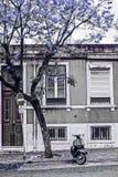 Gator av Lisbon Jacarandà ¡, Arkivfoton