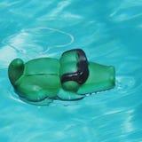 Gator in de pool met glazen royalty-vrije stock fotografie