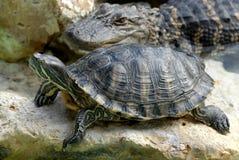 Gator e tartaruga Fotografia Stock Libera da Diritti