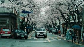 Gator fodrade med träd som på våren blomstrar säsong på den Jinhae Gunhangje festivalen, Jinhae, Sydkorea Arkivbilder