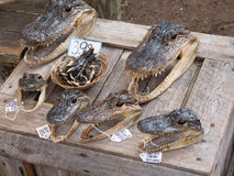 Gator Heads and Feet. On display for sale in a market in Florida Stock Photo