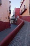 Gator i Guanajuato arkivbilder