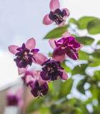 Gator i London - dingla rosa och violetta blommor royaltyfri fotografi