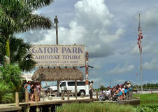 Gator park. At florida everglades Stock Images