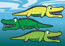 Gators. Vector illustration of alligators and crocodiles underwater Royalty Free Stock Photo