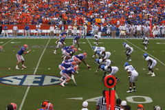 Gators vs. Wildcats royalty free stock image