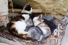 Gatos Fotografia de Stock Royalty Free