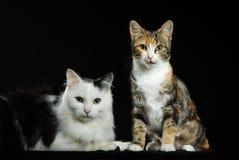 Gatos Imagens de Stock