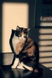 gatos   Imagens de Stock Royalty Free