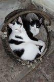 gatos Fotos de Stock Royalty Free
