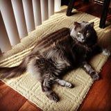 gatos Imagen de archivo libre de regalías