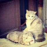 gatos Foto de Stock Royalty Free