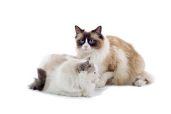 Gatos Imagenes de archivo