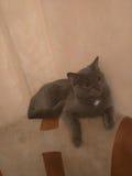 ¡Gatos! Fotografía de archivo