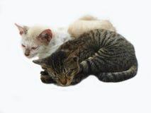 2 gatos fotografía de archivo libre de regalías