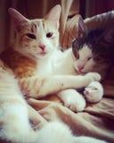 gatos Fotos de Stock