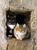 Gatos Fotografía de archivo