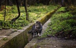 Gatos abandonados de la calle Imagenes de archivo