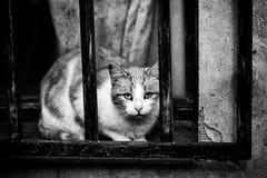 Gatos abandonados de la calle Imagen de archivo libre de regalías