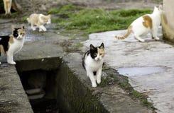 Gatos abandonados de la calle Imágenes de archivo libres de regalías
