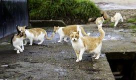 Gatos abandonados de la calle Fotografía de archivo