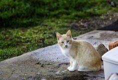 Gatos abandonados de la calle Foto de archivo