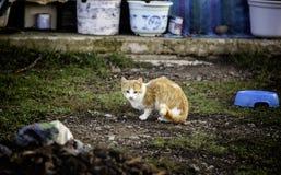 Gatos abandonados de la calle Imagen de archivo