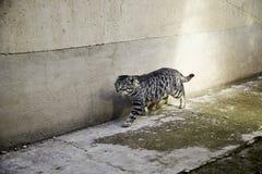 Gatos abandonados de la calle Fotos de archivo libres de regalías