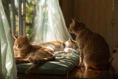 Gatos acurrucados en el alféizar Foto de archivo libre de regalías