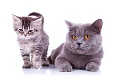 Gatos adorables Foto de archivo libre de regalías