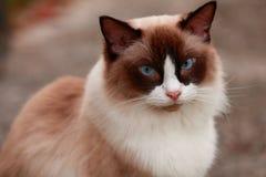 Gatos animais Imagens de Stock Royalty Free