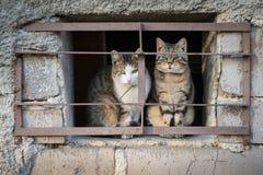 Gatos assustado atrás das barras fotografia de stock royalty free