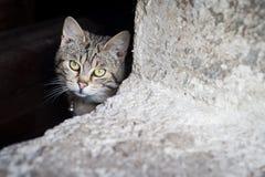 Gatos asustados detrás de barras Fotografía de archivo libre de regalías