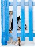 Gatos atrás de uma porta Imagem de Stock Royalty Free