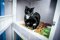 Gatos blancos y negros en un refugio para animales Fotografía de archivo libre de regalías
