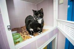 Gatos blancos y negros en un refugio para animales Imágenes de archivo libres de regalías