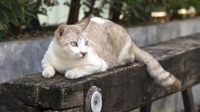 Gatos bonitos Fotos de Stock Royalty Free