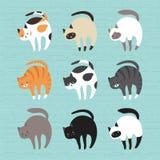 Gatos bonitos ajustados Fotografia de Stock