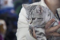 Gatos bonitos e bonitos Foto de Stock Royalty Free