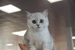 Gatos bonitos e bonitos Fotografia de Stock